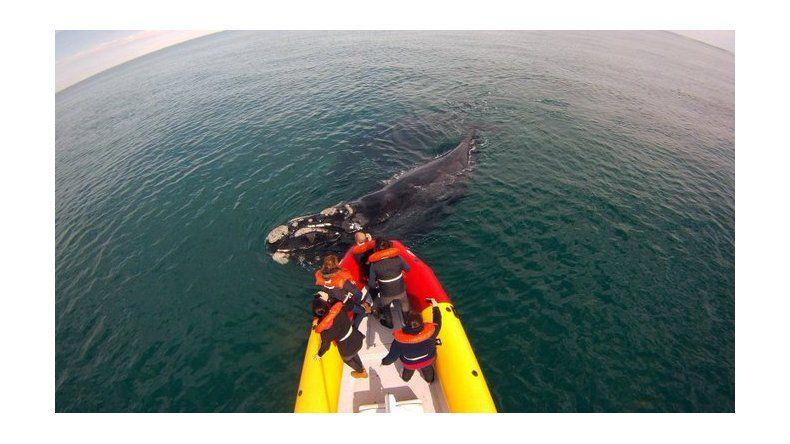 Avistamiento de fauna marina y actividades náuticas en Las Grutas
