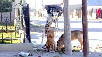 El abandono de mascotas es una de las formas más reiteradas de maltrato animal.