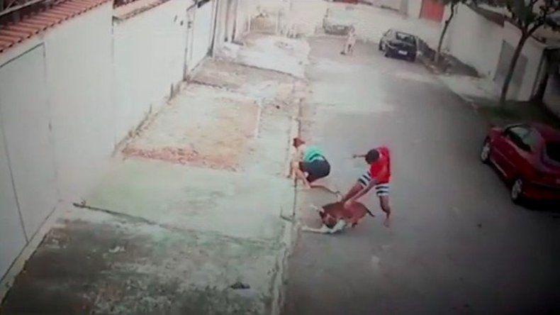 Luchó con un pitbull para salvar a un niño de sus fauces