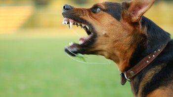 Cuatro perros atacaron a un nene y lo mataron