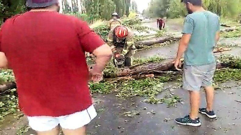 Caída de árboles, de postes de luz, un auto aplastado y techos volados