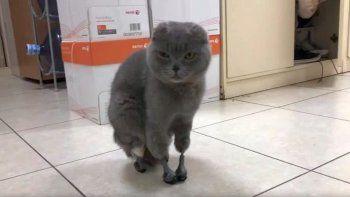 Una gata volvió a caminar gracias a una impresora 3D