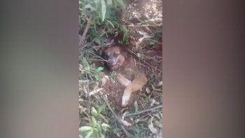rescataron a un perro que fue enterrado vivo