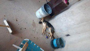 mataron a fierrazos a una perra en medio de un robo