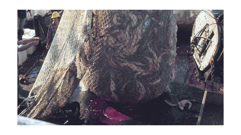 El gremio de los capitanes de pesca denunció la depredación de los recursos ictícolas en Chubut.