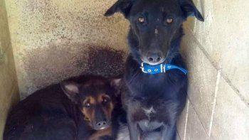 Oski y Orejita quedaron huérfanos tras un incendio y buscan una familia