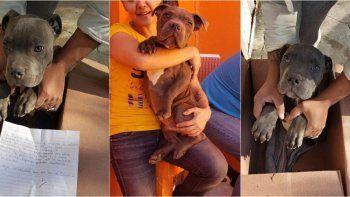 Escribió una carta y dio en adopción a su perro porque el padre le pegaba
