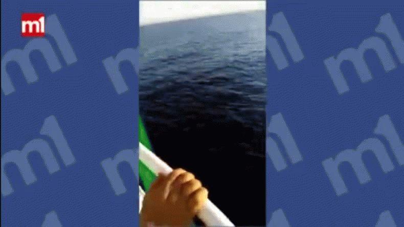 Saltó 12 metros de altura para salvar a una ballena
