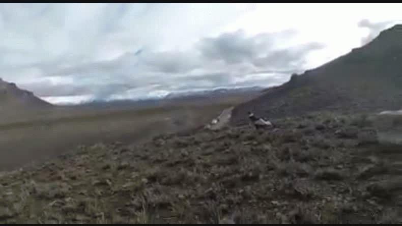 Liberaron un cóndor en El Maitén luego de una curación exitosa