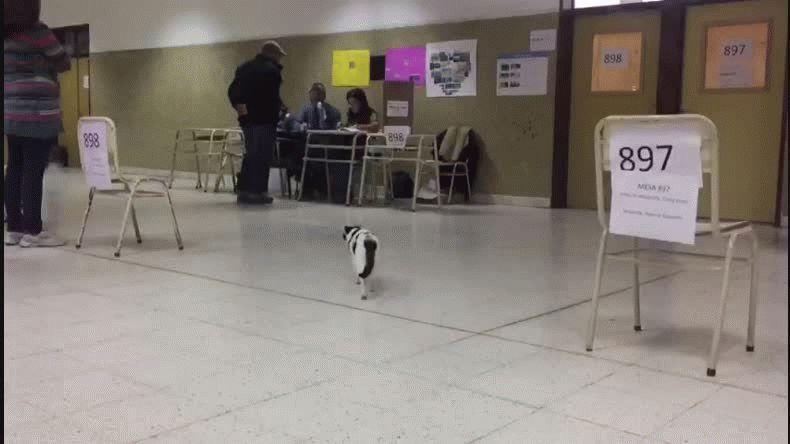 Una gatita dio la nota en la Escuela 718